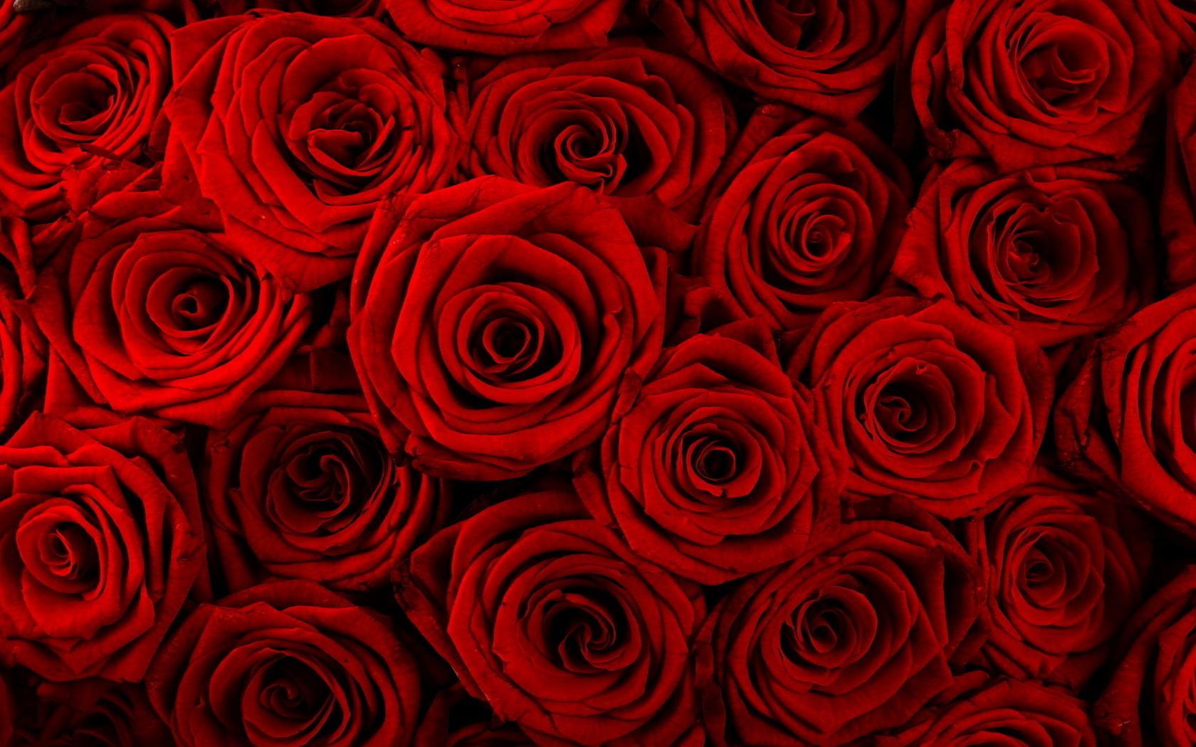 Sant Jordi: roses i espines