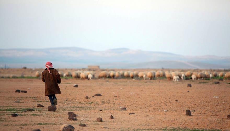 URGENT! Participa a un seminari a Jordània sobre el medi ambient en l'entorn rural