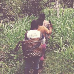 Selva y Vida a l'Equador