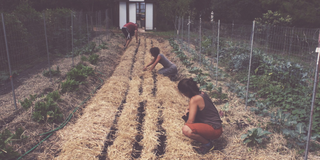 Sostenibilitat ambiental en un projecte de voluntariat a Grècia